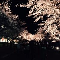 4.3桜.jpg